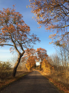 Stara Szkoła - Jesień