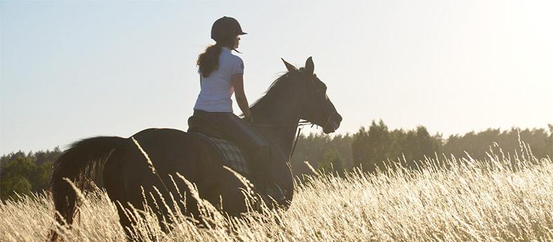 Mazury Agroturystyka konie